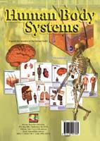 Learning Cards Human Body Systems - A4