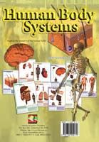 Learning Cards Human Body Systems - A3